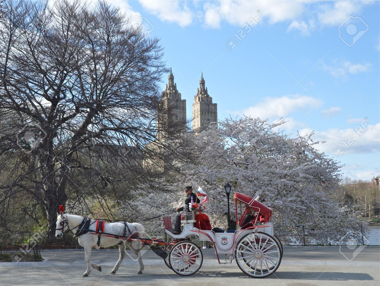 Spring In Central Park, Manhattan, New York USA Stock Photo ...