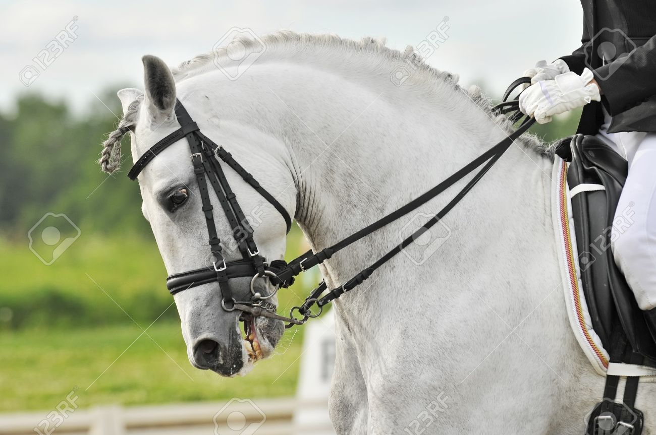 White Horse Dressage Stock Photo Picture And Royalty Free Image Image 7113082