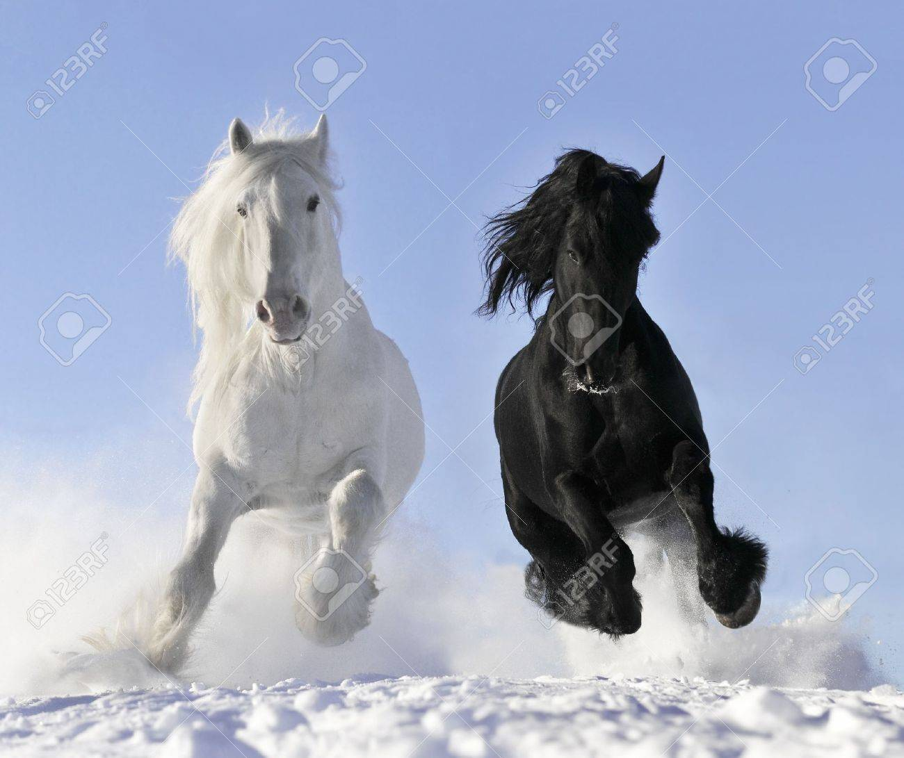 White and Black horse pictures