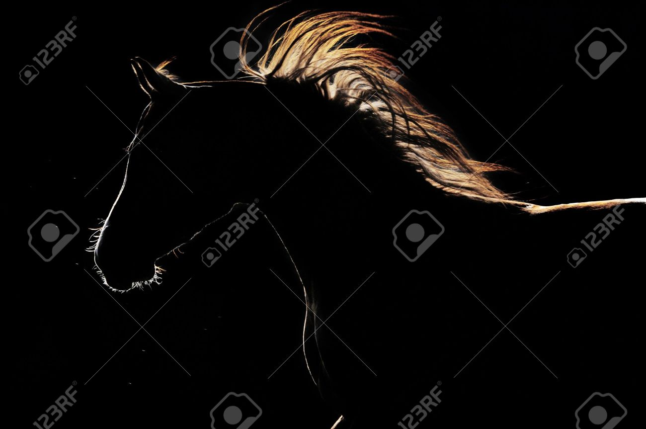 arabian horse silhouette on the dark background Stock Photo - 11007670