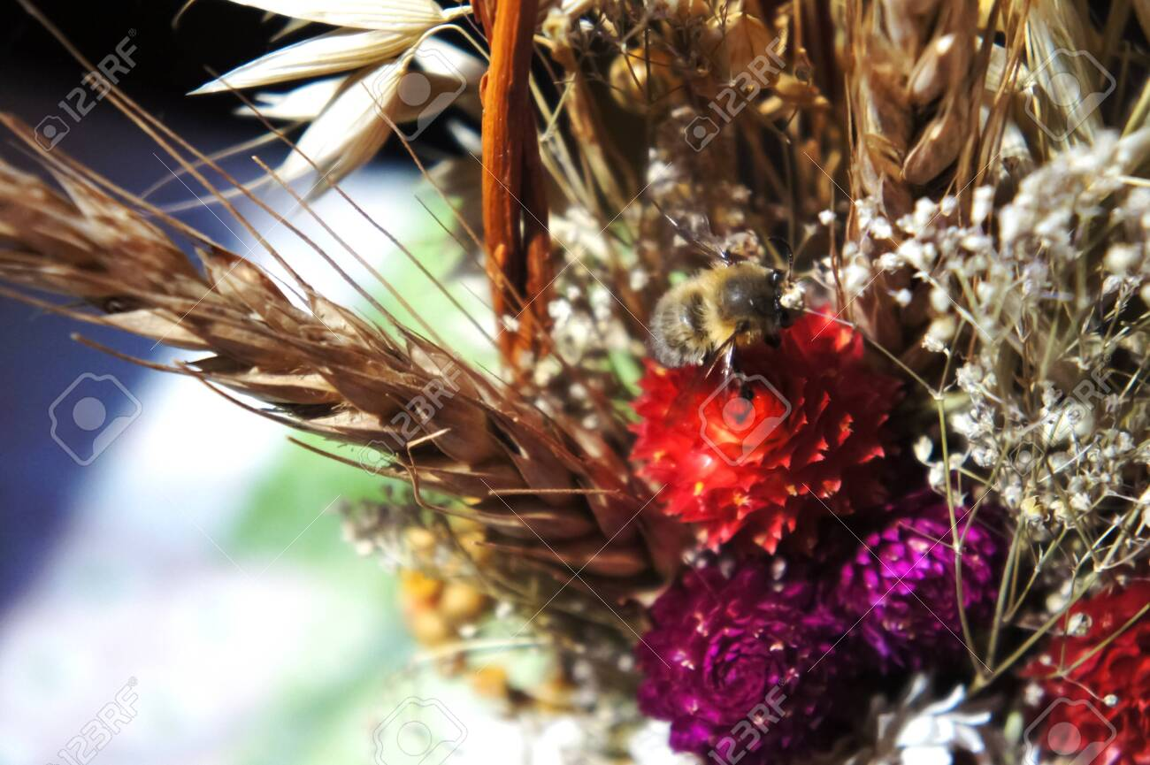 Bouquet Of Dried Flowers Dry Flowers Spring Flower Bouquet Stock Photo Picture And Royalty Free Image Image 120808732