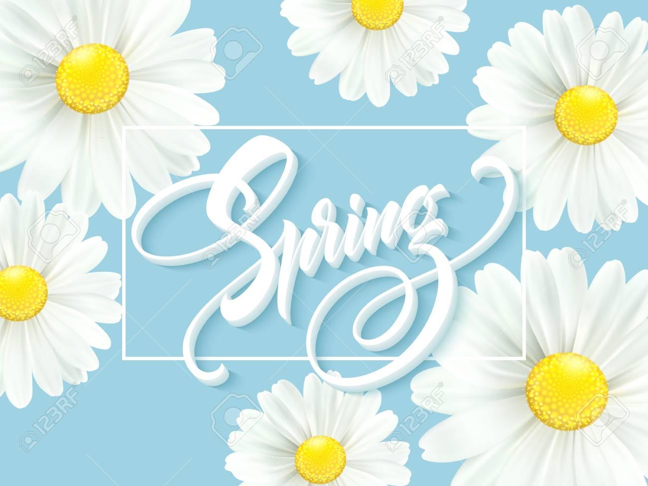 Calligraphic inscription Hello Spring with spring flower - blooming white daisy. Vector illustration - 93533426
