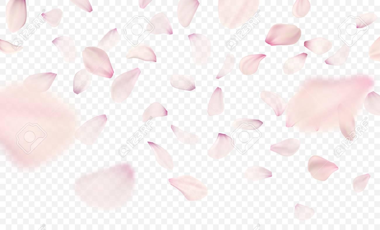Pink sakura falling petals background. Vector illustration - 93533440