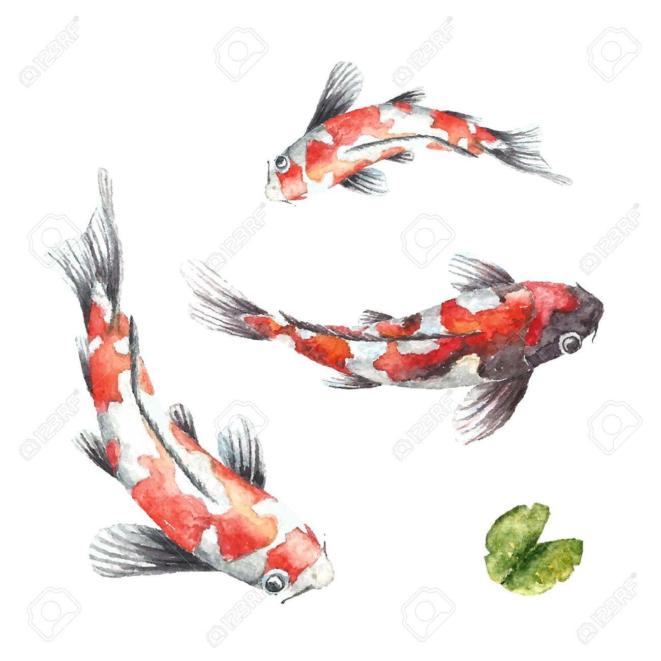 acuarela carpas koi rojo mano aislada dibujar peces del vector foto de