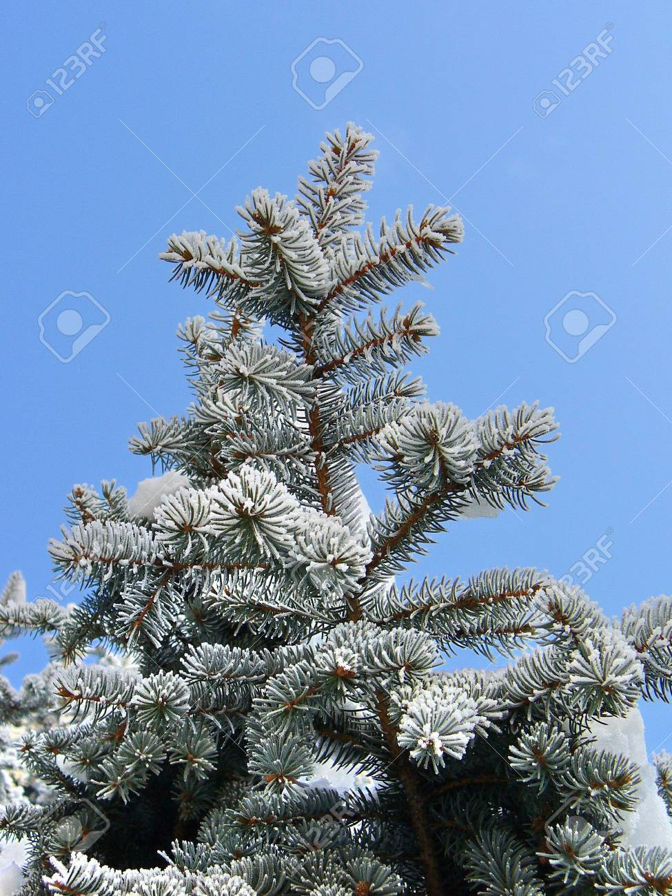 white winter Stock Photo - 2268464