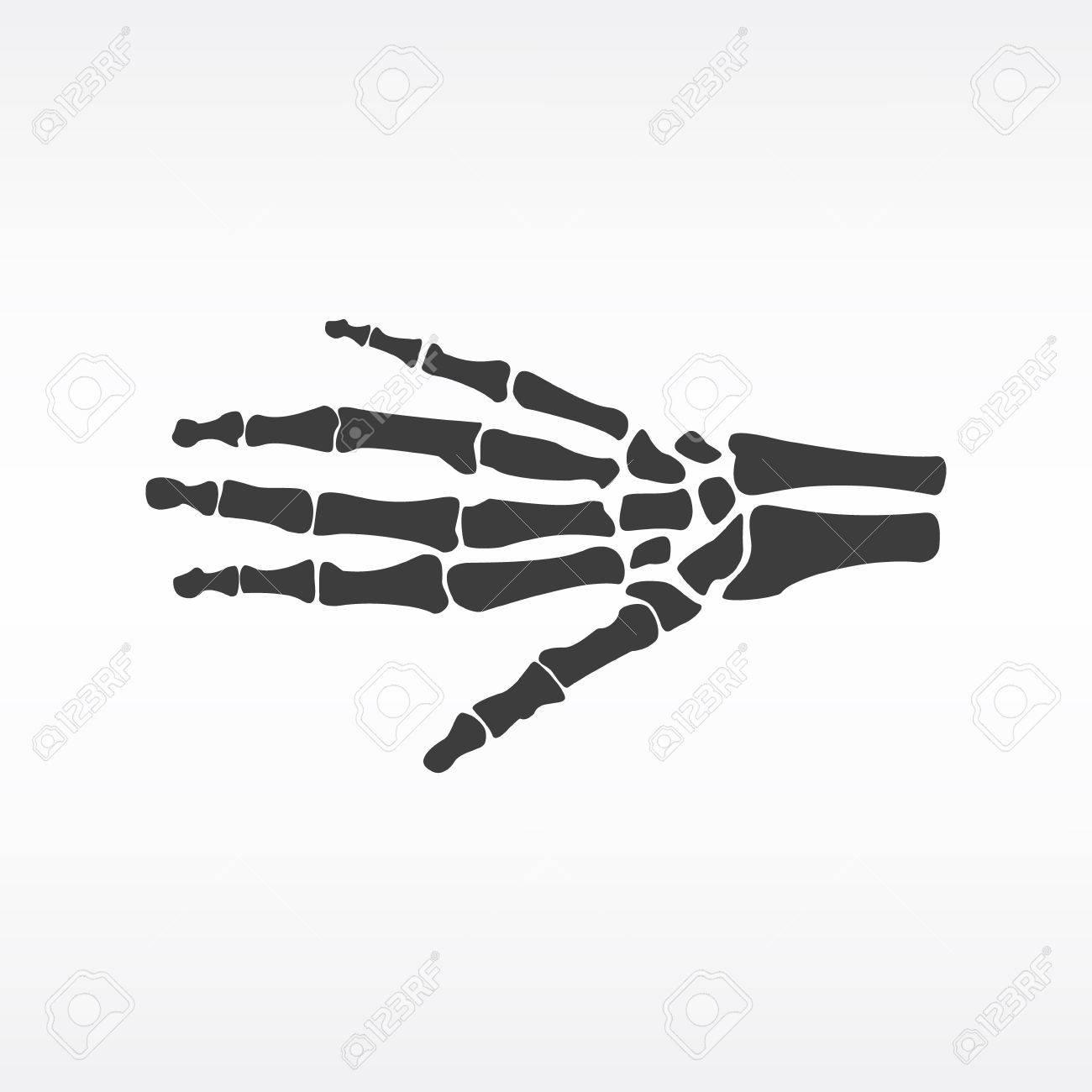 Vector Ilustración De Los Huesos De La Mano. Icono Esqueleto Humano ...