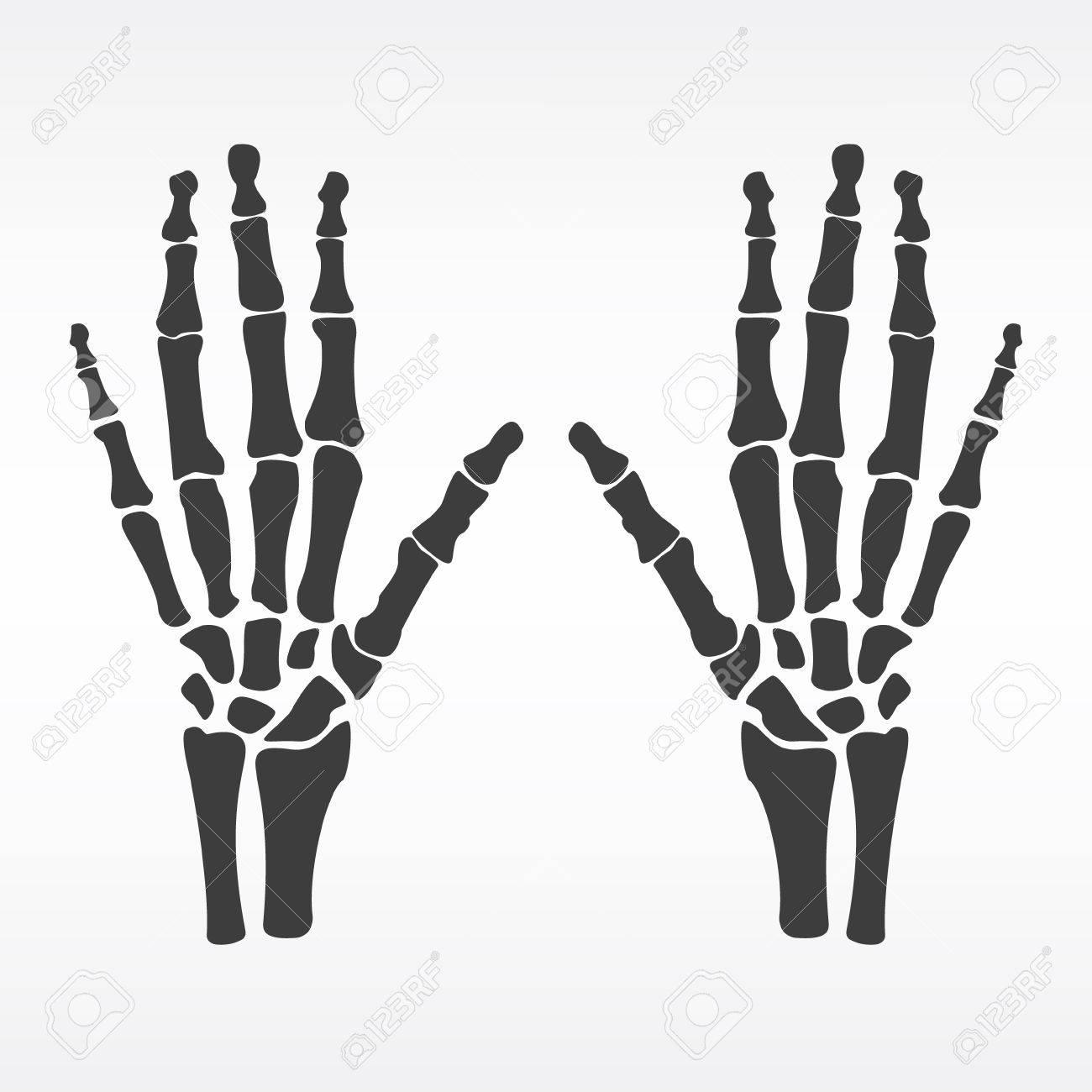 Ilustración Vectorial Manos Huesos. Icono Esqueleto Humano Mano ...
