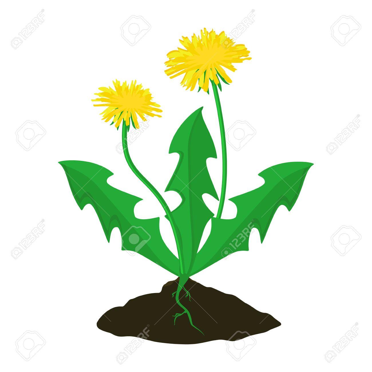 vector illustration summer flower yellow dandelion dandelion rh 123rf com dandelion vector png dandelion vector artwork
