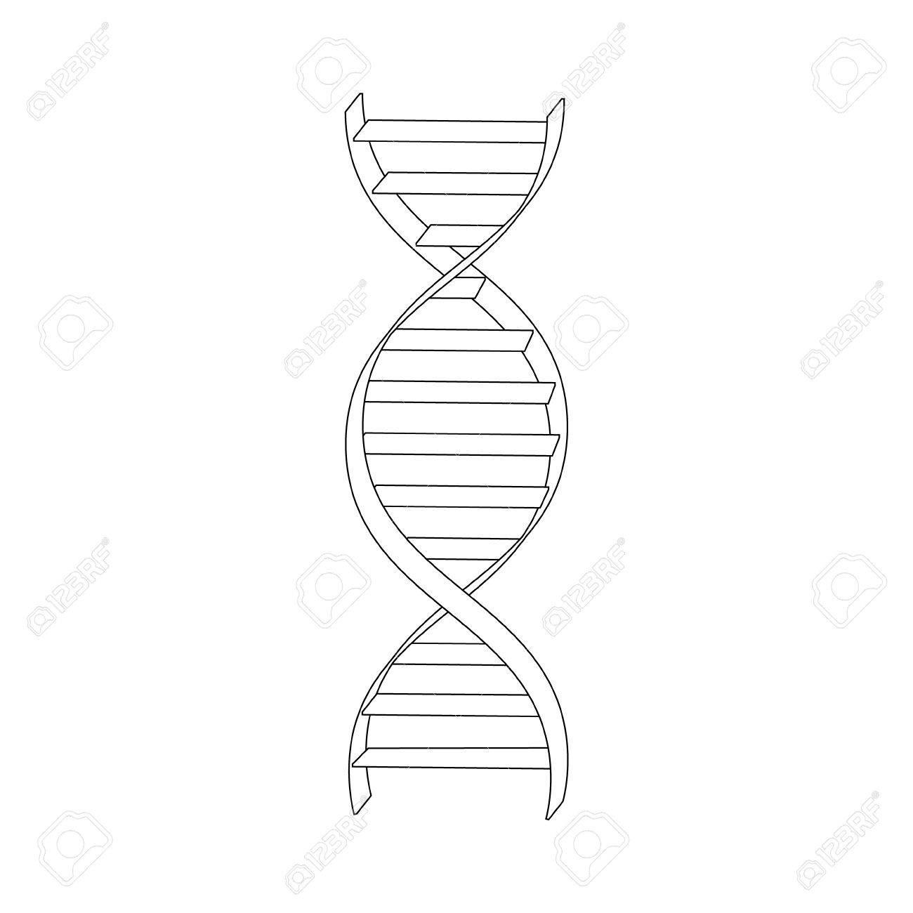 Vector La Ilustración Del Dibujo De Esquema En Espiral Del Adn Icono De Los Símbolos De Adn Signo Genética Elemento