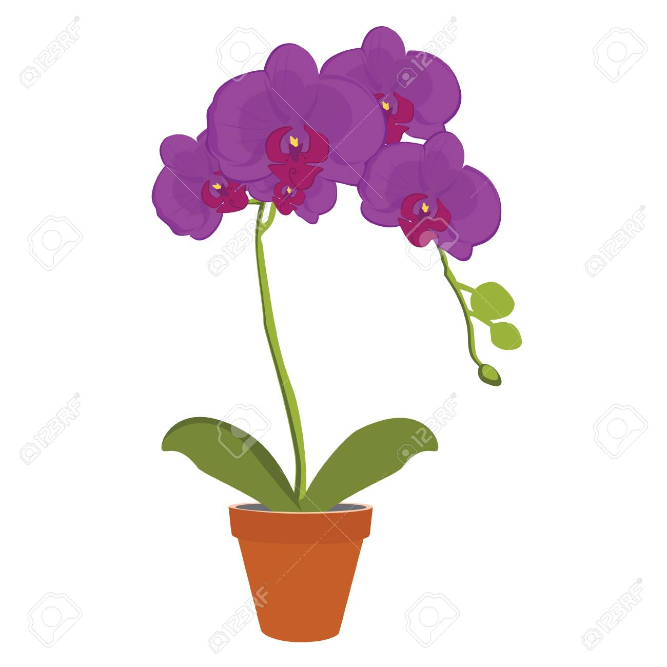 Raster Illustration Exotic Purple Orchid Flower In A Pot