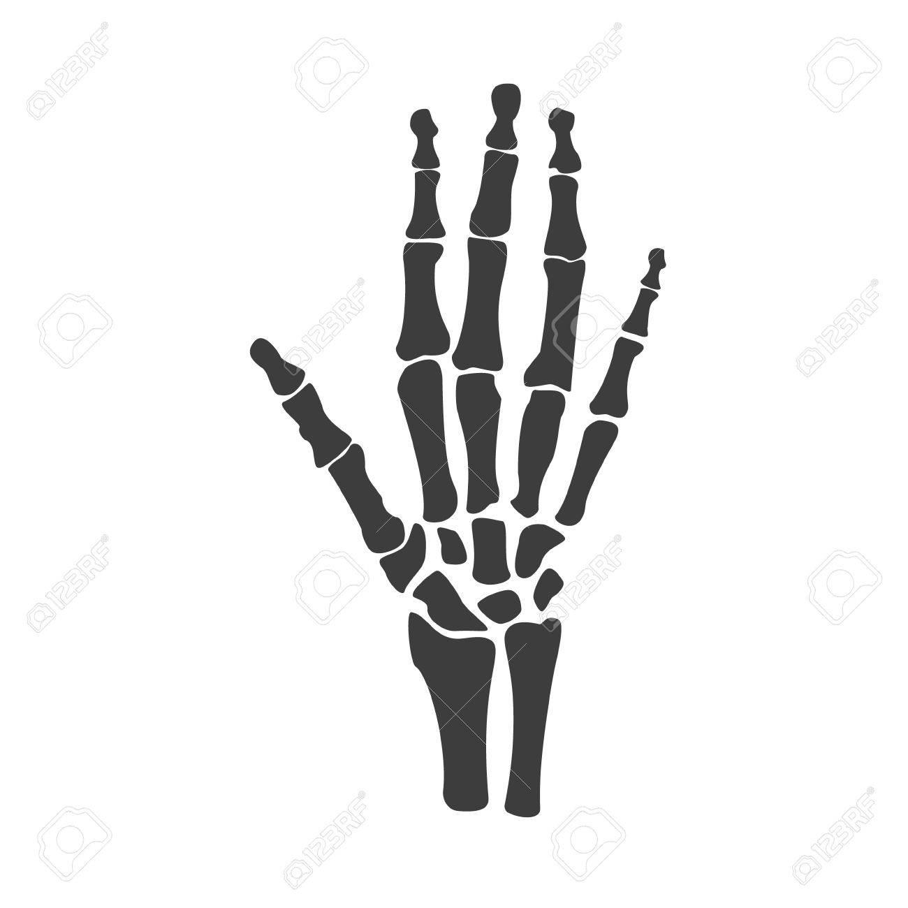 Raster Illustration Hand Bones. Orthopedic Human Hand Skeleton ...