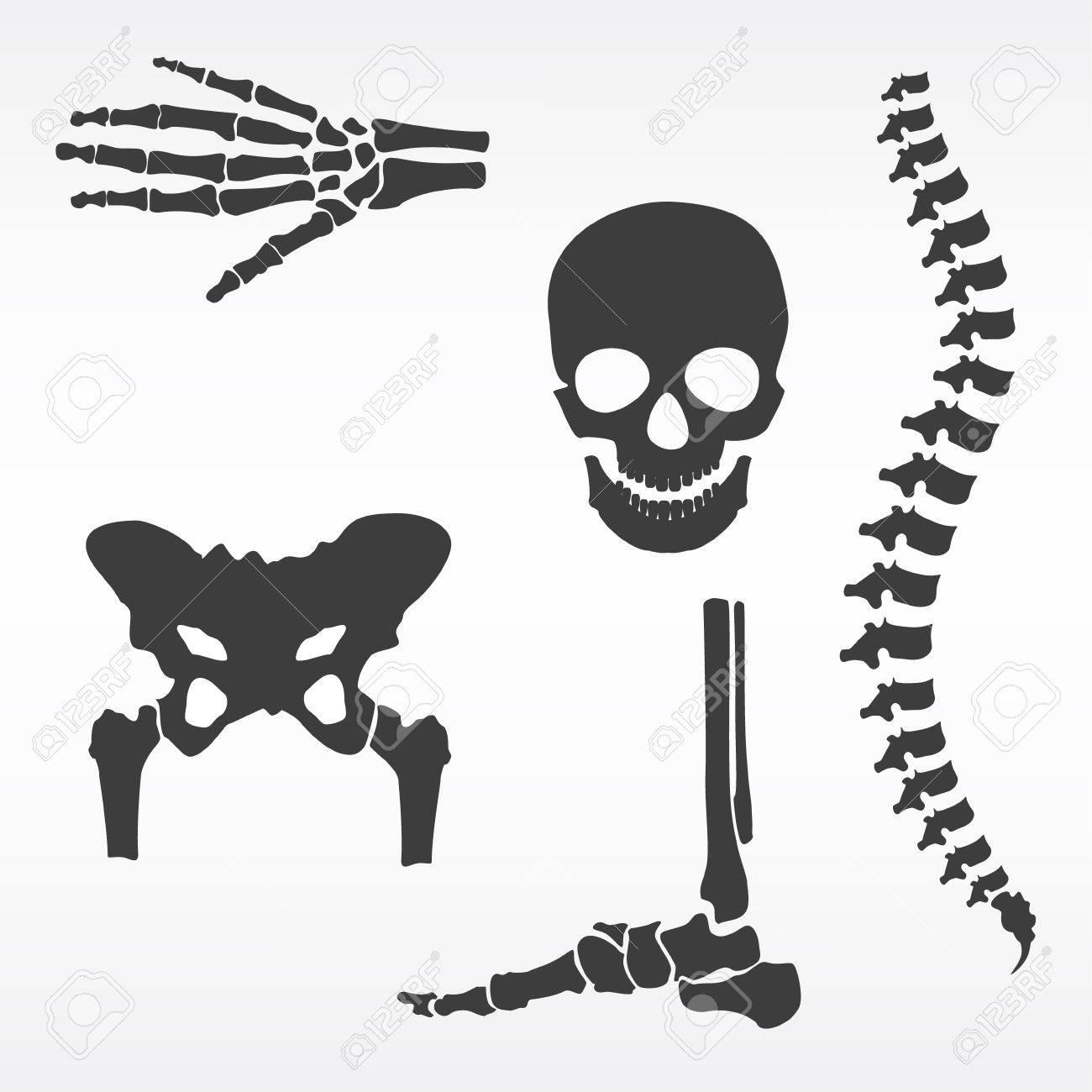 Raster Illustration Parts Of Human Skeleton. Human Joints Raster ...