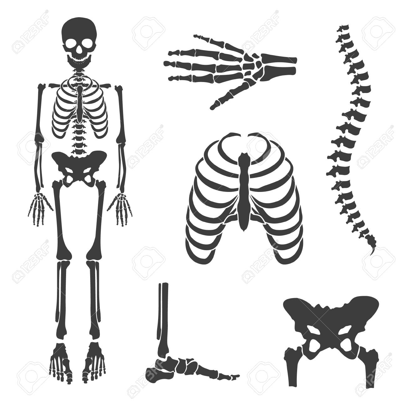 Raster illustration parts of human skeleton human joints raster raster illustration parts of human skeleton human joints raster set skull hip bone ccuart Choice Image