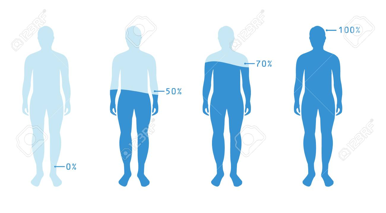 infographic showing water percentage level in human body vector royalty free cliparts vectors and stock illustration image 113122156 infographic showing water percentage level in human body vector