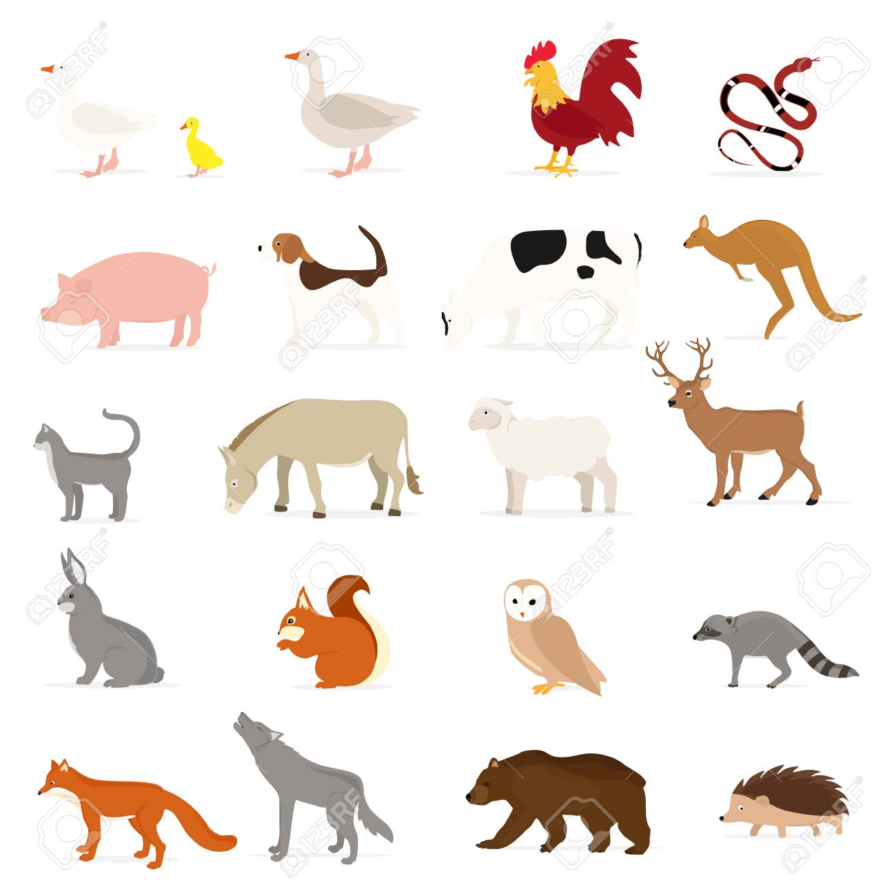 Cute animals collection: farm animals, wild animals isolated on white background. Vector illustration design template - 121671736