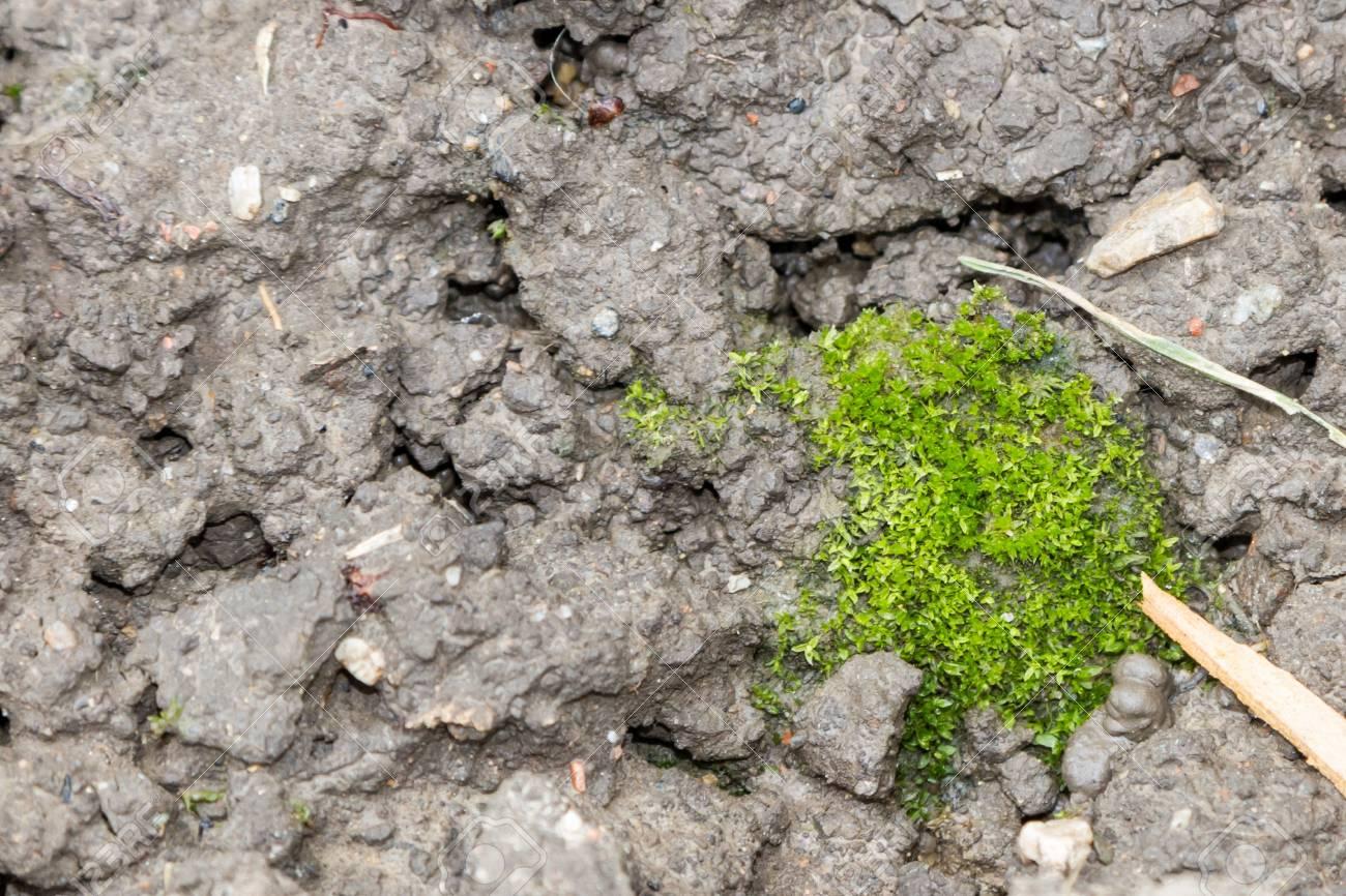 Damp Earth