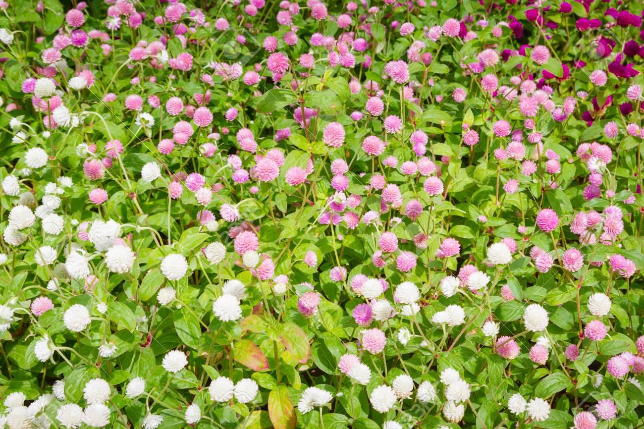 Schöne Blumen Draußen Im Blumenbeet Lizenzfreie Fotos, Bilder Und ...