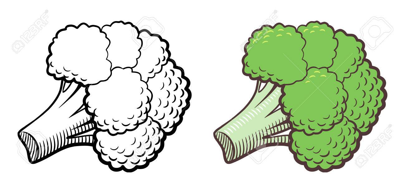 stylized illustration of broccoli vector isolated on white royalty free cliparts vectors and stock illustration image 59645317 stylized illustration of broccoli vector isolated on white