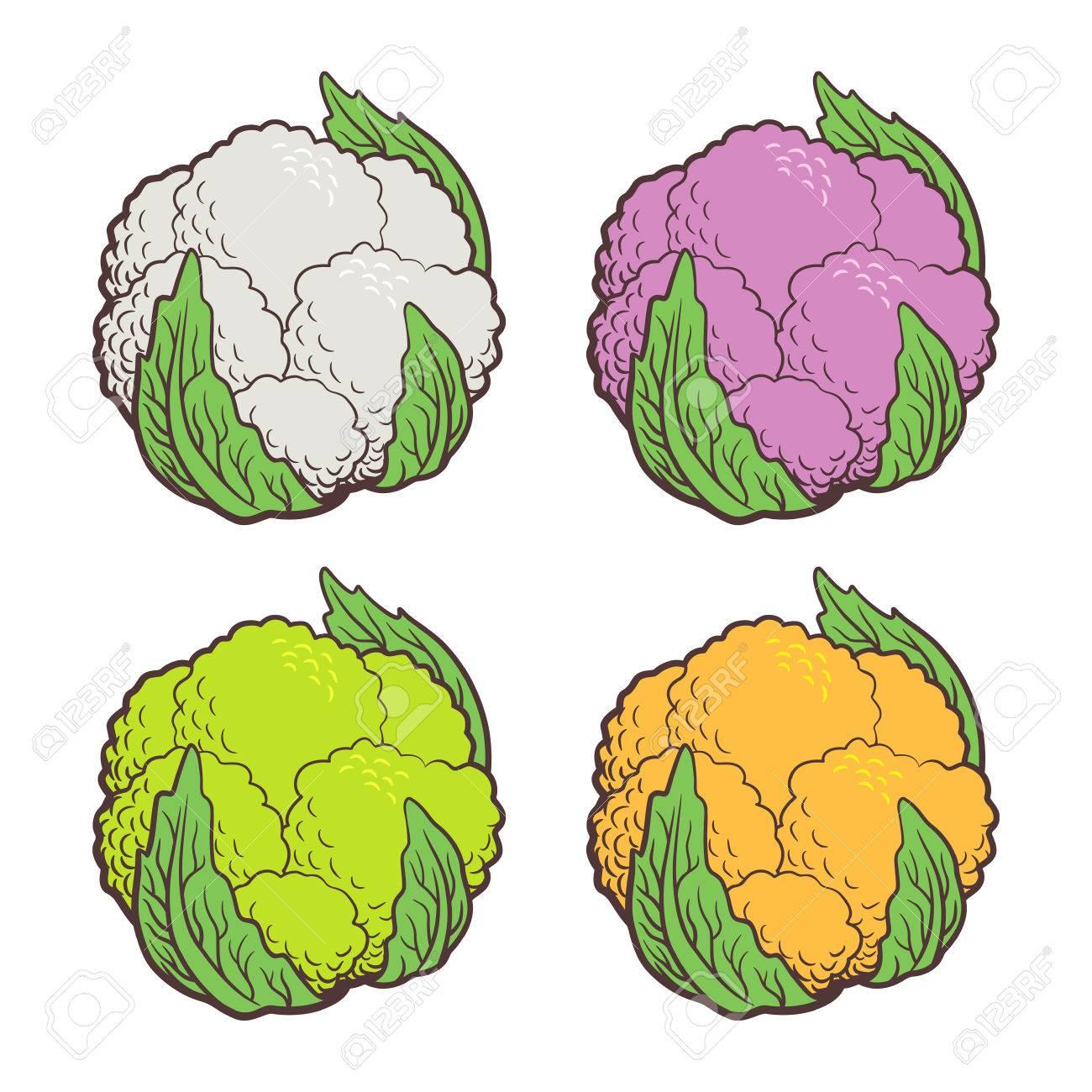Illustration Stylisee De Chou Fleur Differentes Sortes De Chou