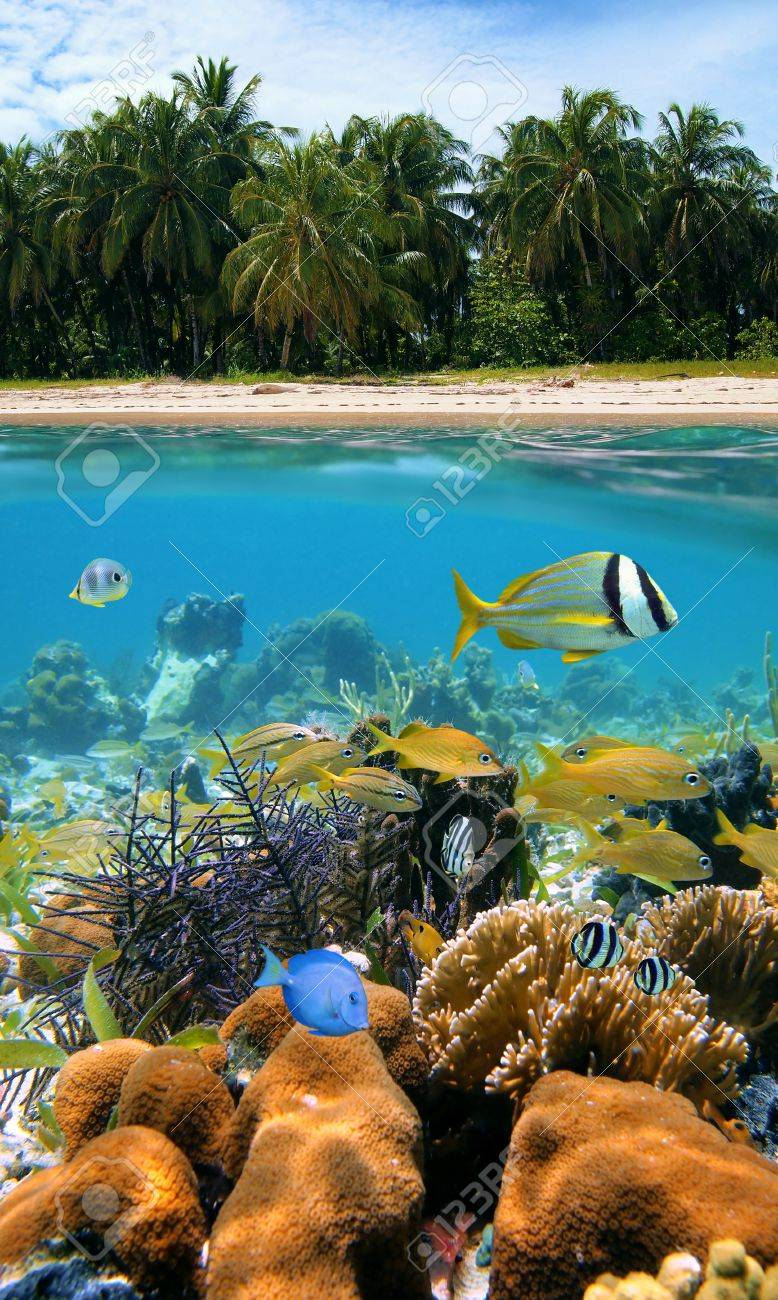 Underwater and surface view with beautiful beach and coconuts trees, coral reef and tropical fish, Caribbean sea Stock Photo - 10802077