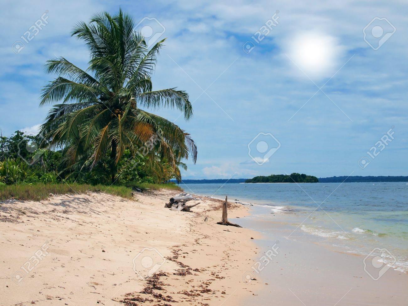 Beach with coconut tree in Zapatillas islands,Caribbean, Bocas del Toro, Panama Stock Photo - 10802073