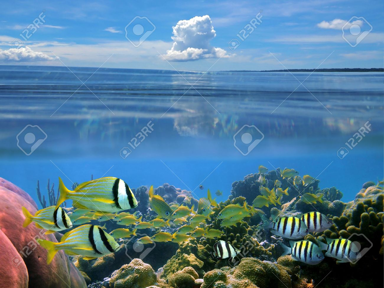 Surface and underwater view with school of tropical fish, hard coral and blue sky with cloud, Caribbean Stock Photo - 11095758