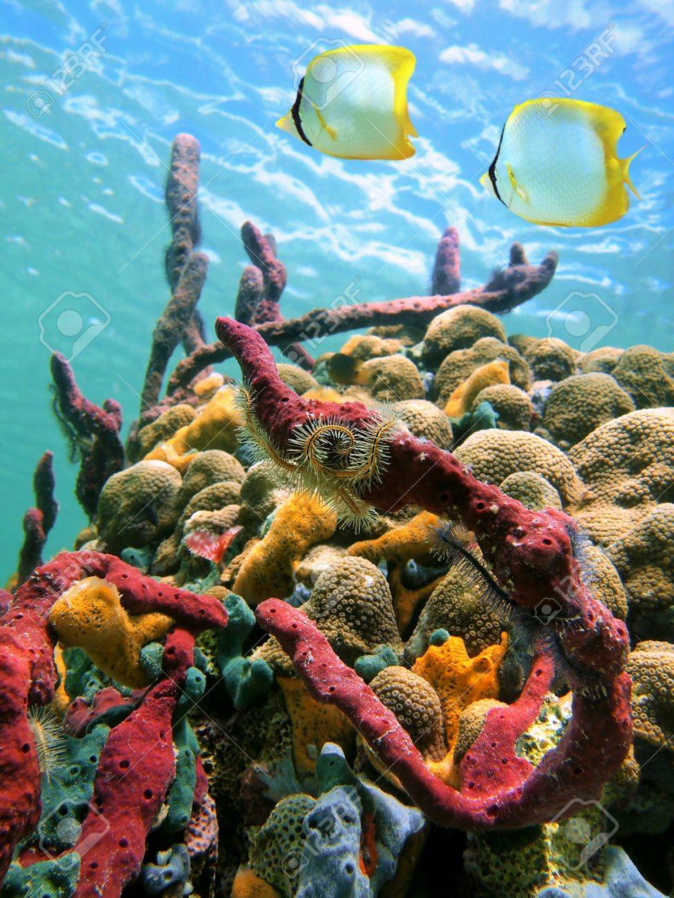 Colorful sea sponges and tropical fish in a coral reef  with water surface in background, Caribbean sea Stock Photo - 11535206