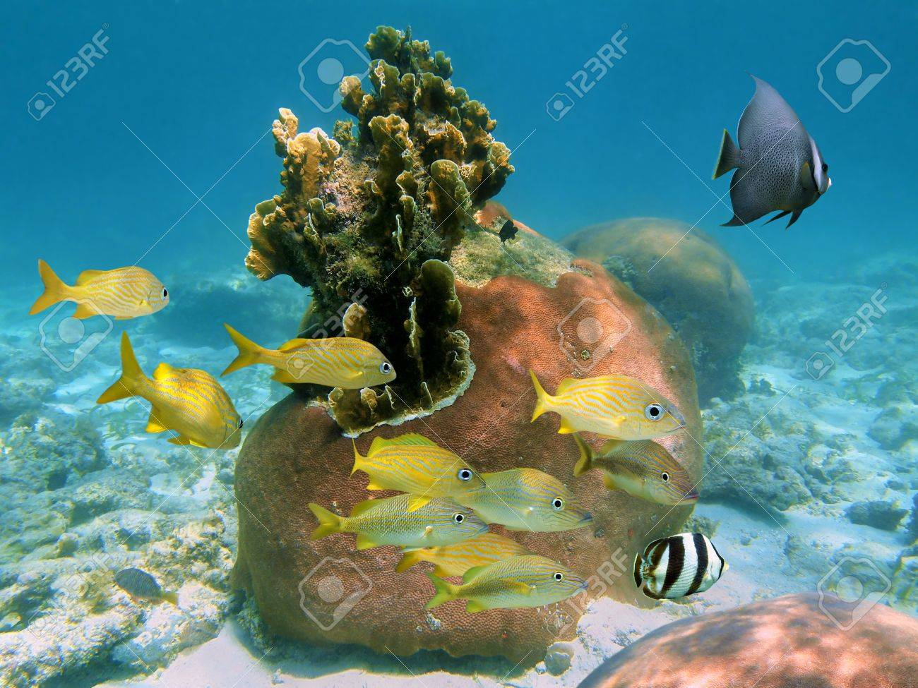 Tropical Reef Scuba Diving Scuba Diving on a Reef With a