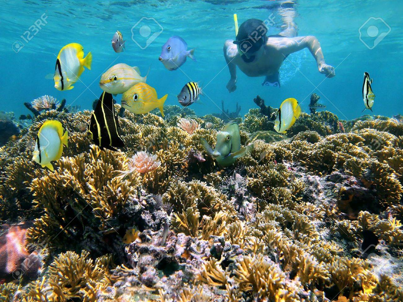 Snorkeler over a coral reef with school of tropical fish in front of him Stock Photo - 13498534