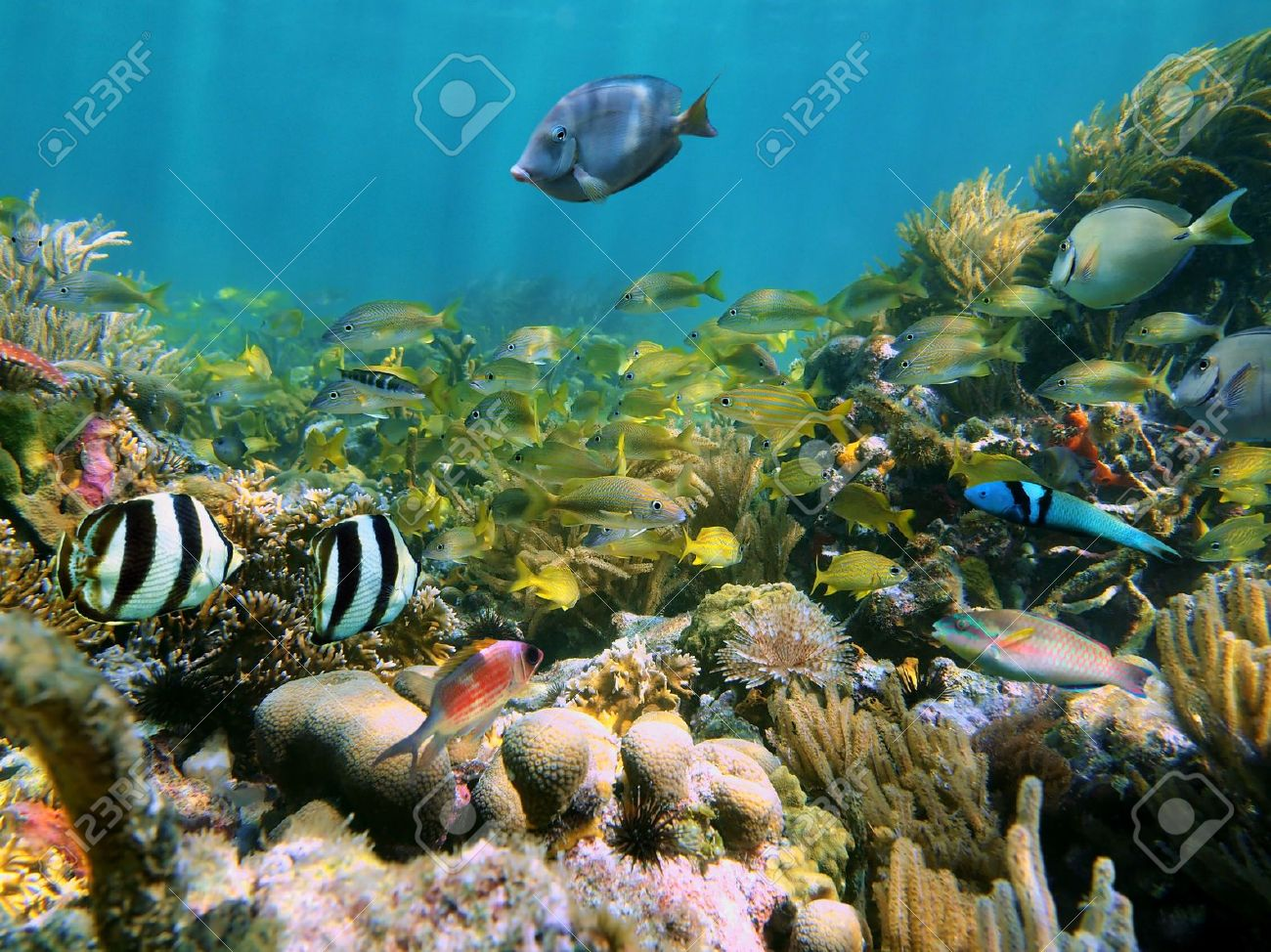 Coral reef with school of colorful tropical fish Stock Photo - 13498570