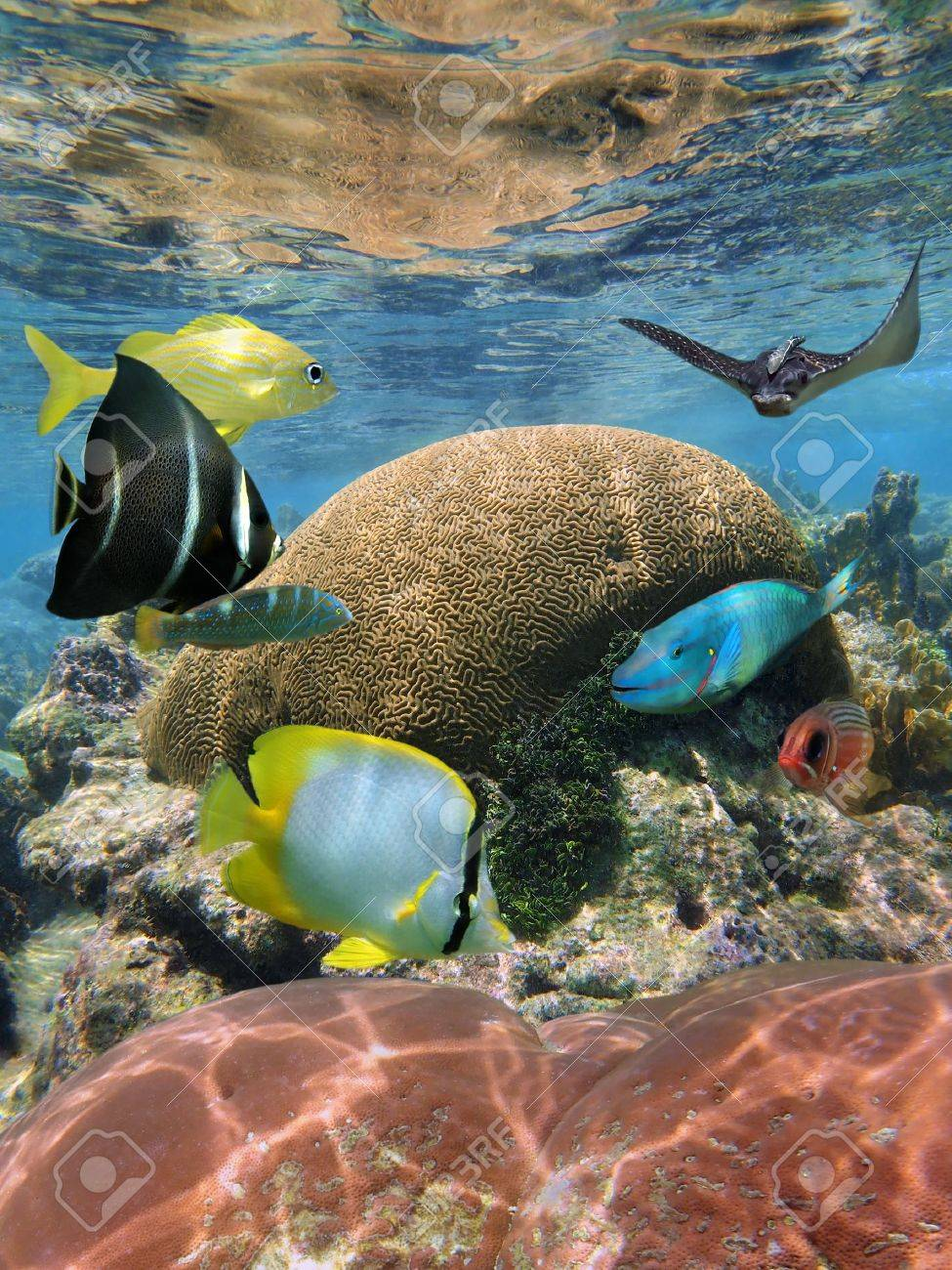Underwater coral reef with colorful tropical fish and an eagle ray Stock Photo - 15207079