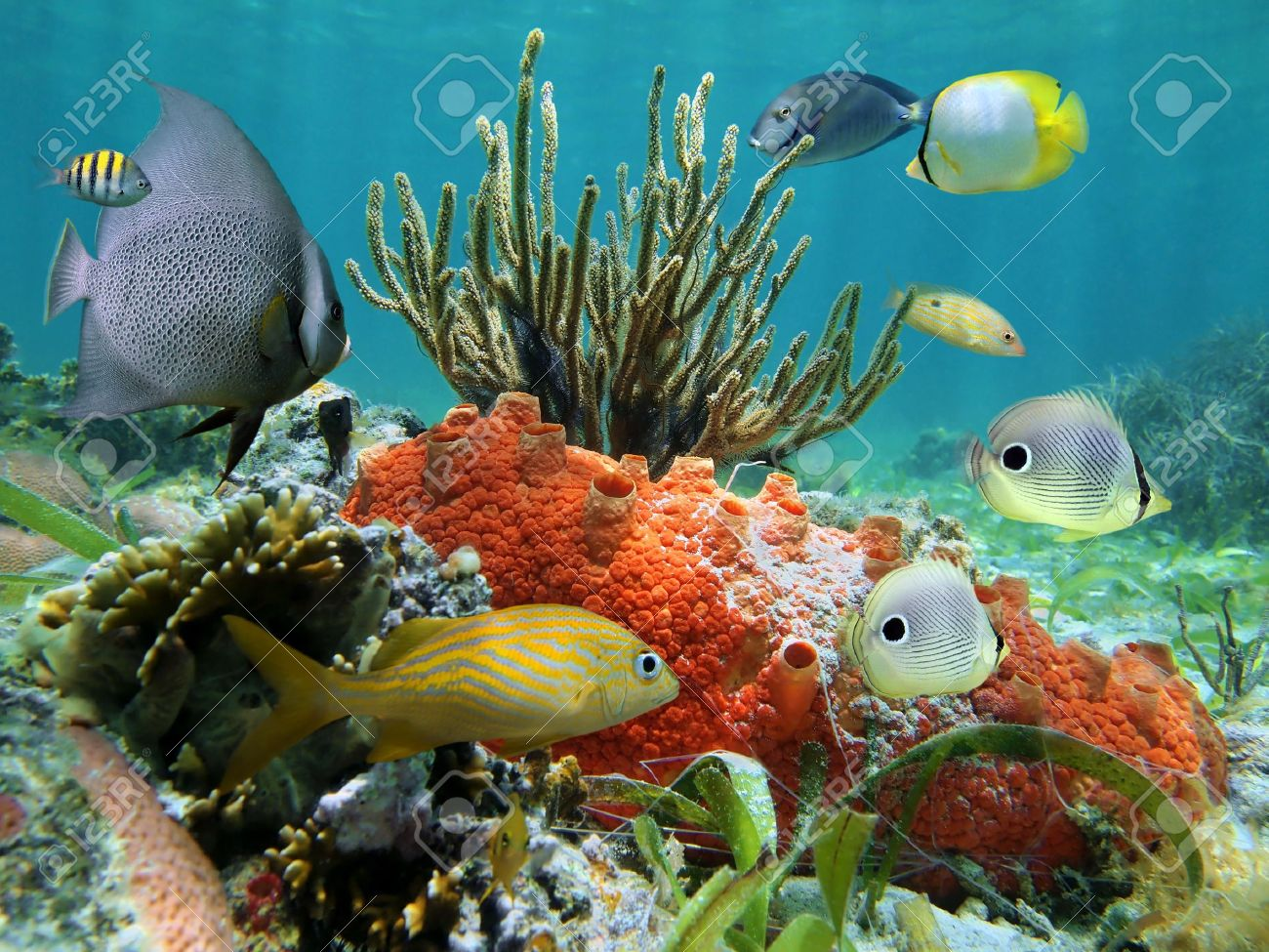 stock photo underwater colors of life in a coral reef caribbean sea - Caribbean Life