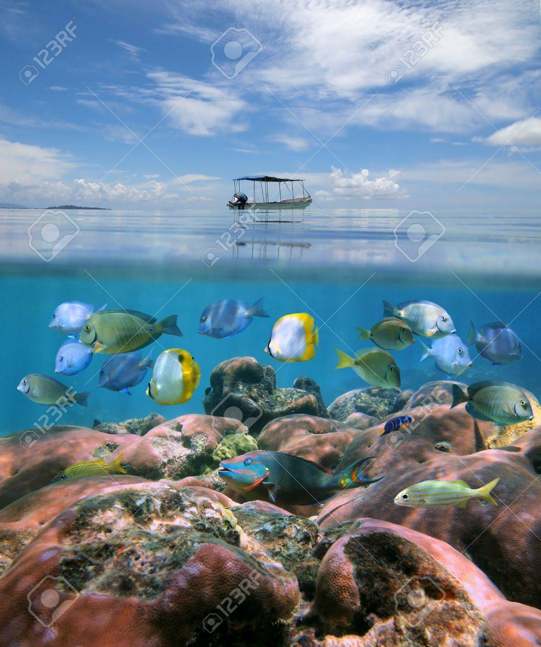 boat alone above a coral reef with shoal of tropical fish just boat alone above a coral reef with shoal of tropical fish just under the water surface