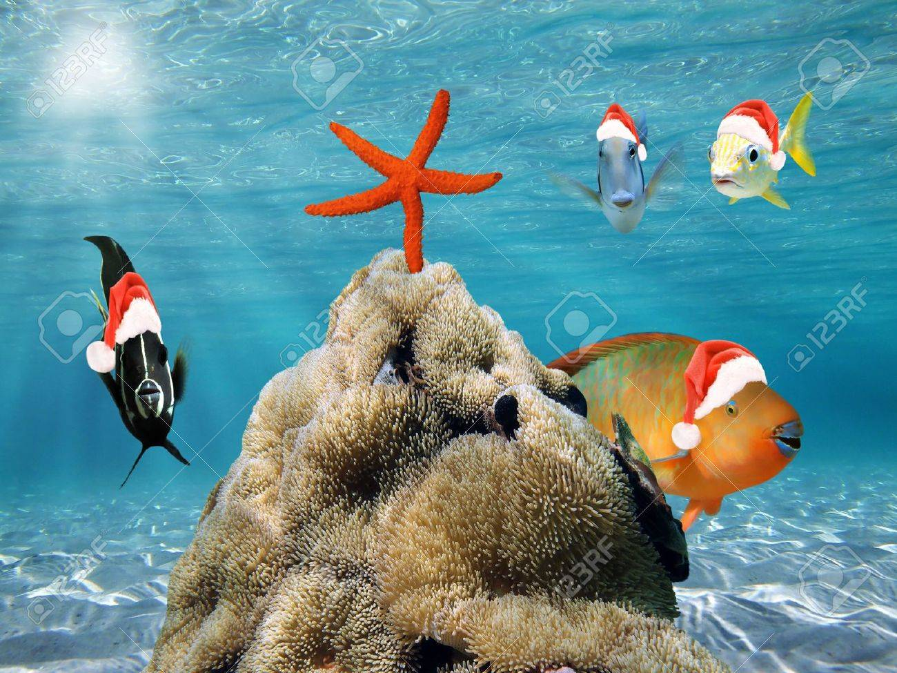 Underwater scene with  fish in red Santa Claus hat and a starfish on top of a pile of sea anemone Stock Photo - 16615734