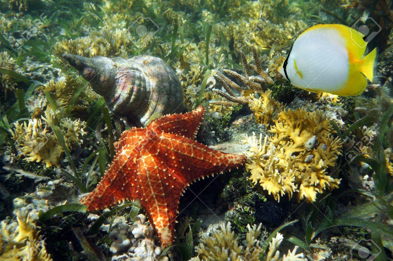 cuscino stella marina con una triton atlantic tromba coperture del