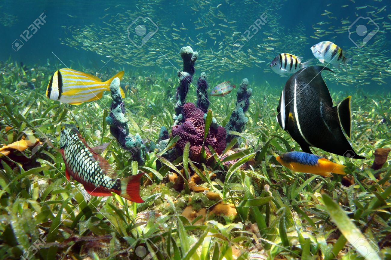 Au-delà de la douance... - Page 3 19090543-colorful-sea-sponges-and-tropical-fish-in-shallow-seabed-of-turtle-grass