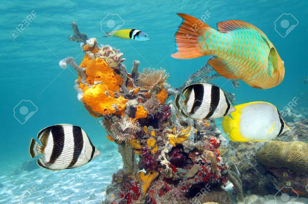 Leuchtende Farben Marine Leben In Einem Korallenriff Mit Bunten ...