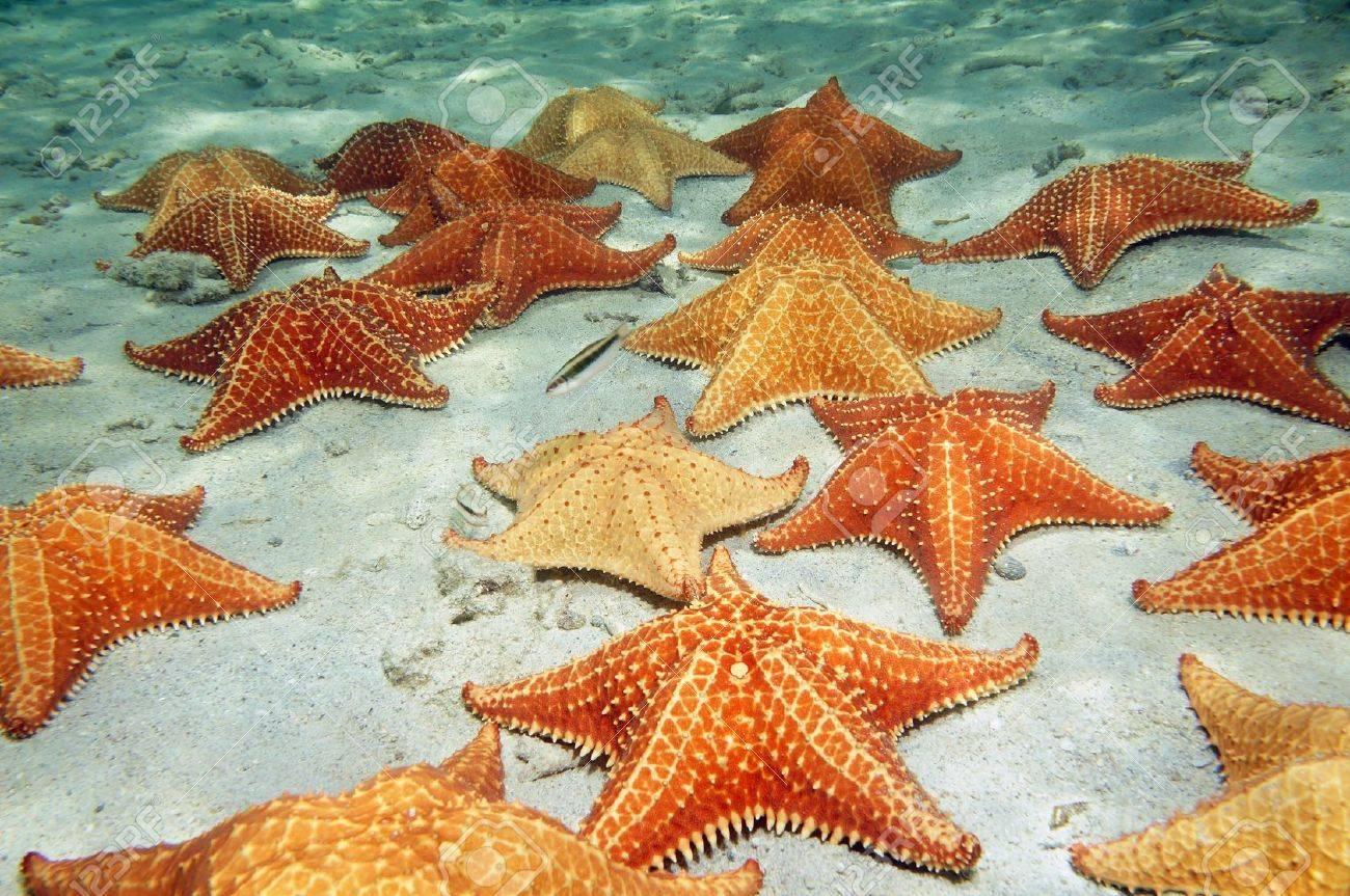 un sacco di cuscino stella marina su una spiaggia di fondo dell