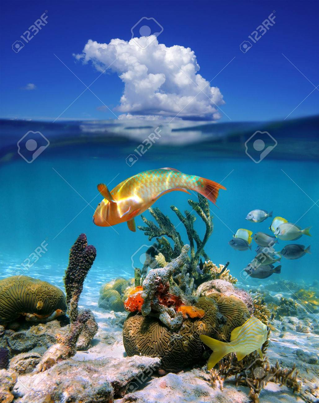 Above And Below Stock Photos. Royalty Free Above And Below Images