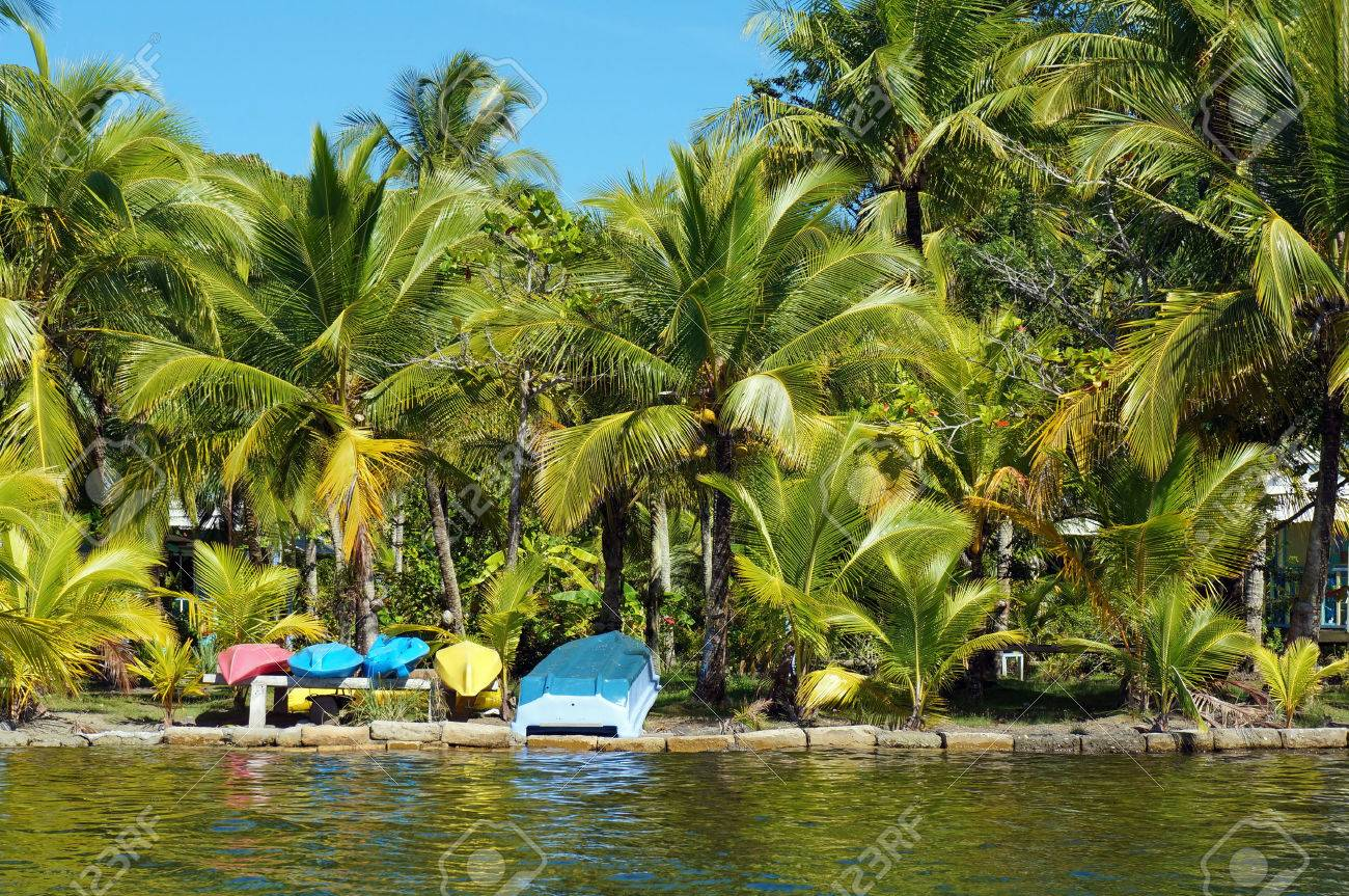 Tropical Coast With Coconut Palm Trees And Colorful Kayaks With ...