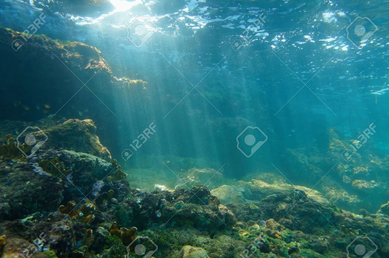 Underwater Sunbeams Through The Water Surface Viewed From The Seabed On A  Reef Of The Caribbean