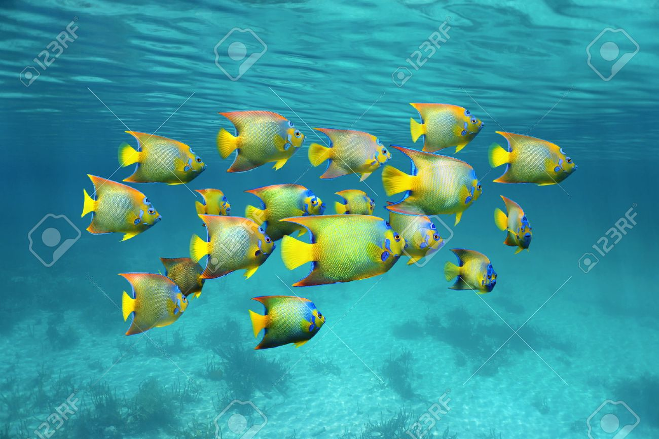 Tropical Fish Stock Photos. Royalty Free Tropical Fish Images