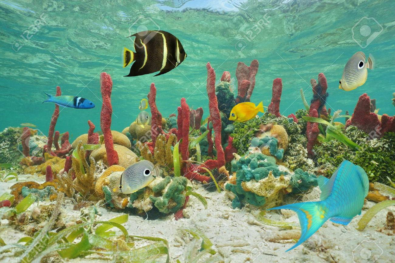 Tropical Fish Stock Photos. Royalty Free Tropical Fish Images