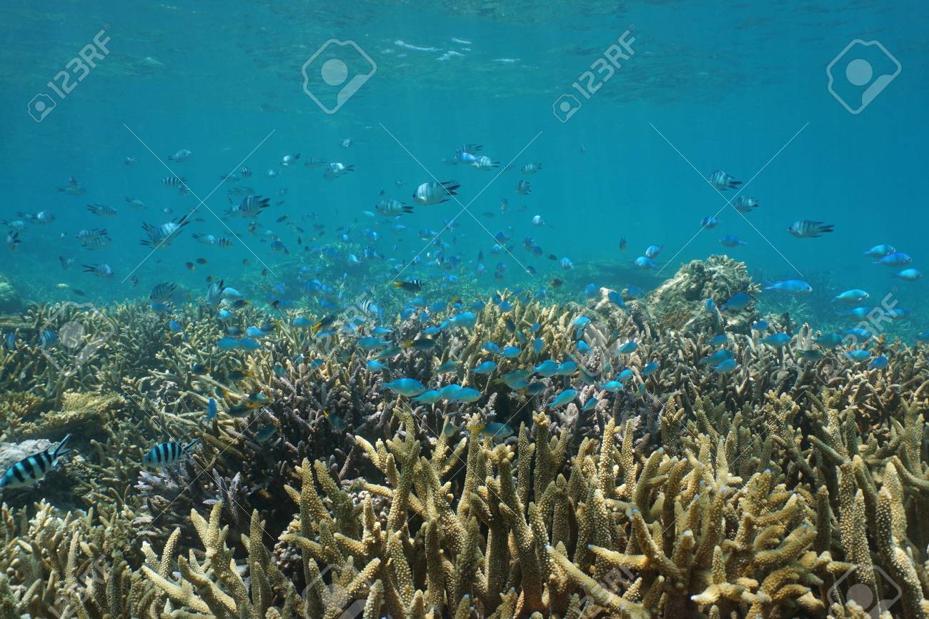 underwater coral reef with fish shoal of various species of