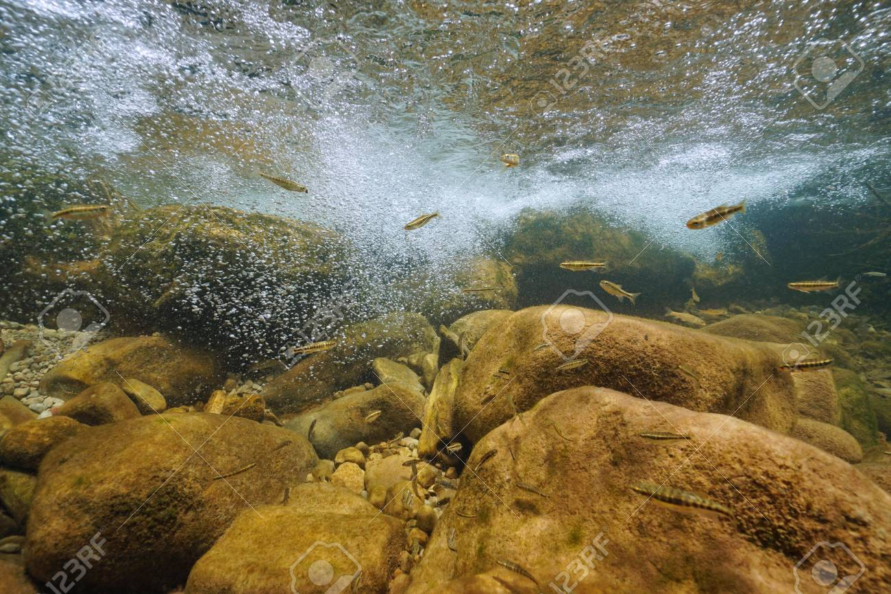 A Rocky River Underwater With Air Bubbles And Minnow Freshwater Stock Photo Picture And Royalty Free Image Image 111835644