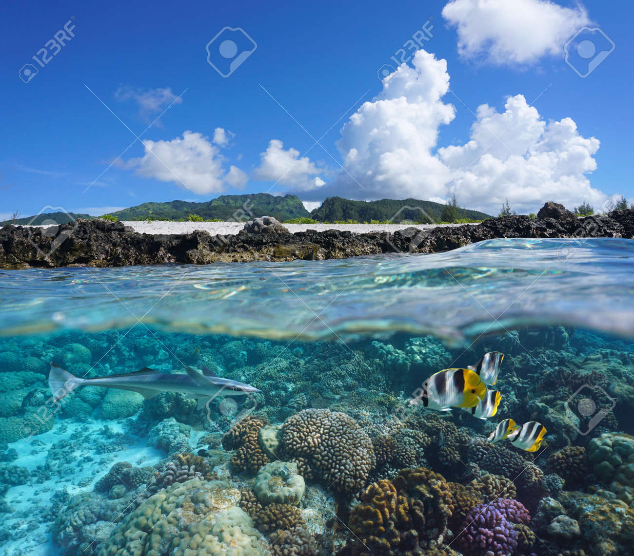 Coral reef with tropical fish and island seashore, split view over and under water surface, south Pacific ocean, French Polynesia, Huahine - 169279986