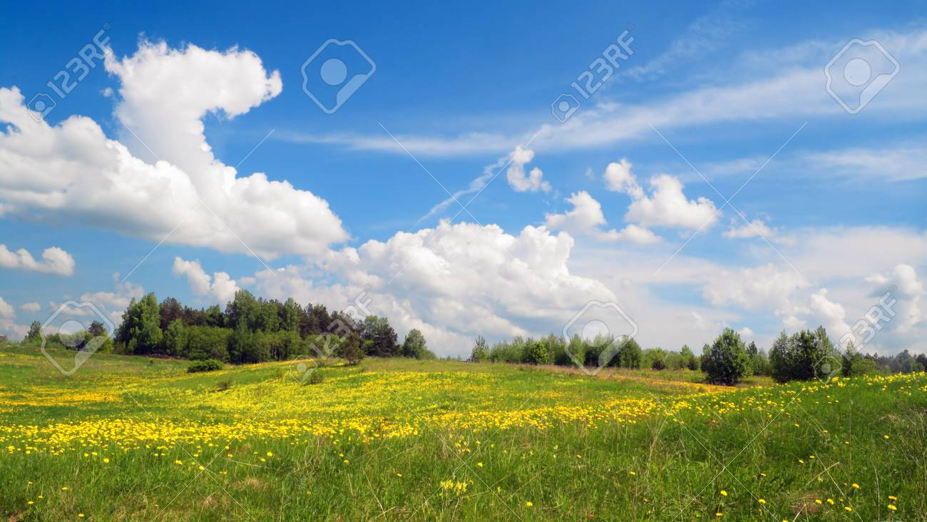 Field of flowers, may  landscape Stock Photo - 7577210