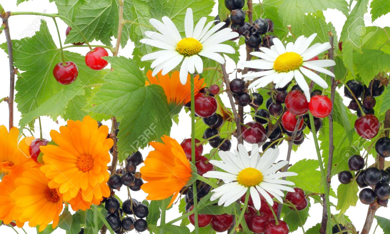 Wild flowers, cherry and currant a summer mix. Stock Photo - 7703049