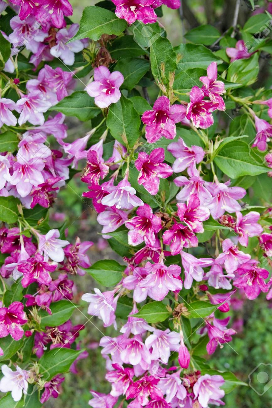 Floral Background From Real Pink Flowers And Emerald Leaves Stock Photo Picture And Royalty Free Image Image 39779447