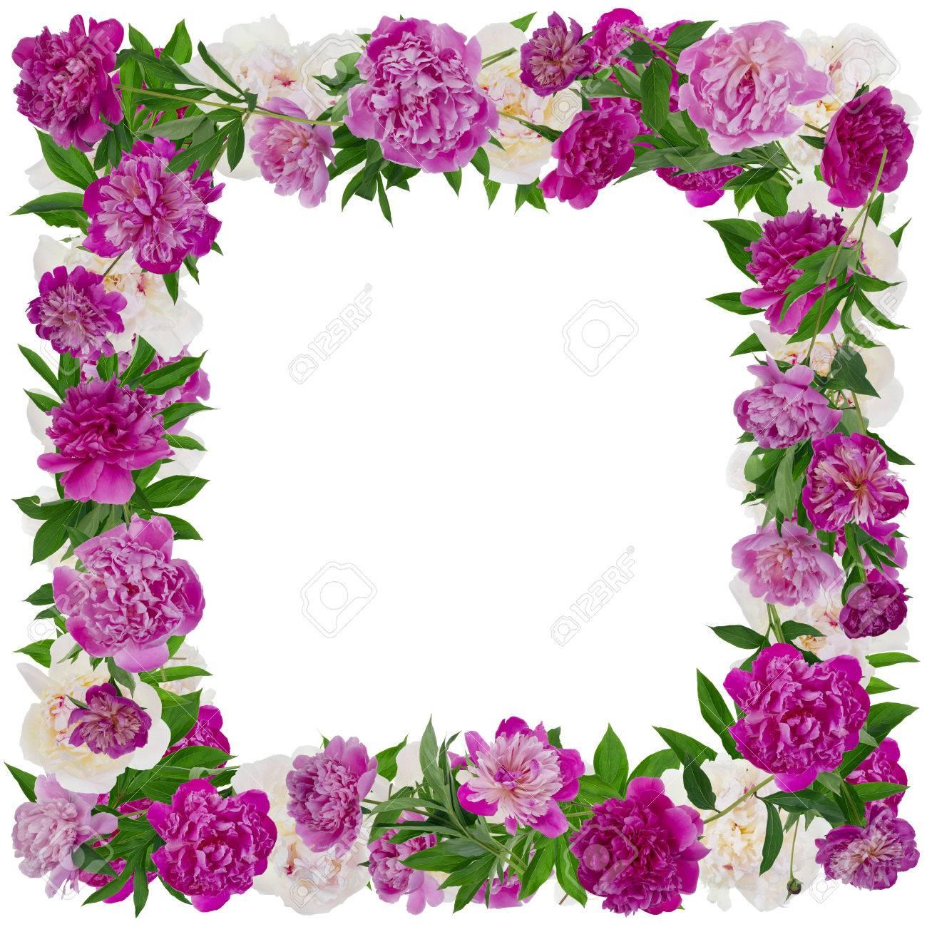 Marco De Fotos De Flores De Color Rosa Y Blanco Peonias Reales Ramas Aislado En El Collage Hecho A Mano Negro De Varias Fotos